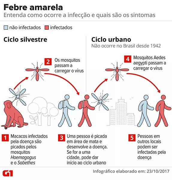 Como acontece a transmissão da febre amarela